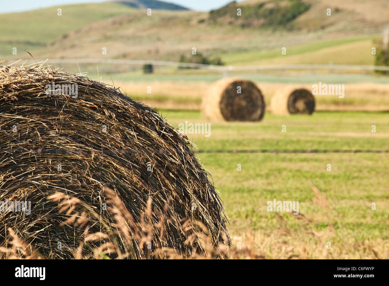 Round grass bails on a farm in Idaho - Stock Image