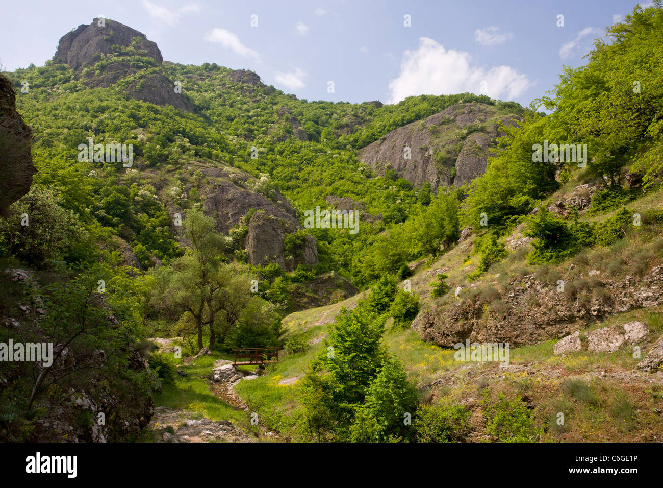 Attractive botanically-rich protected area, with Oriental Hornbeam and Manna Ash, on volcanic rock, near Rila, Bulgaria. - Stock Image