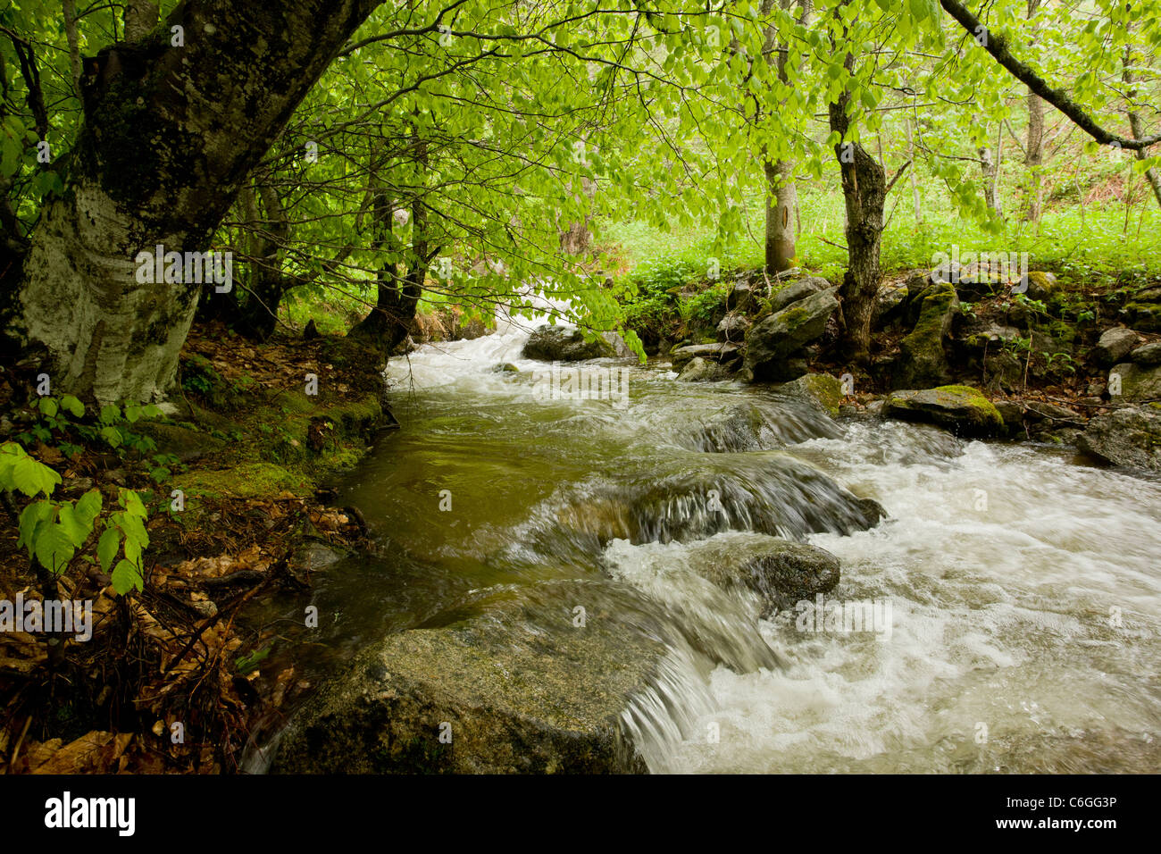 Stream in the Pirin National Park, Bulgaria - Stock Image