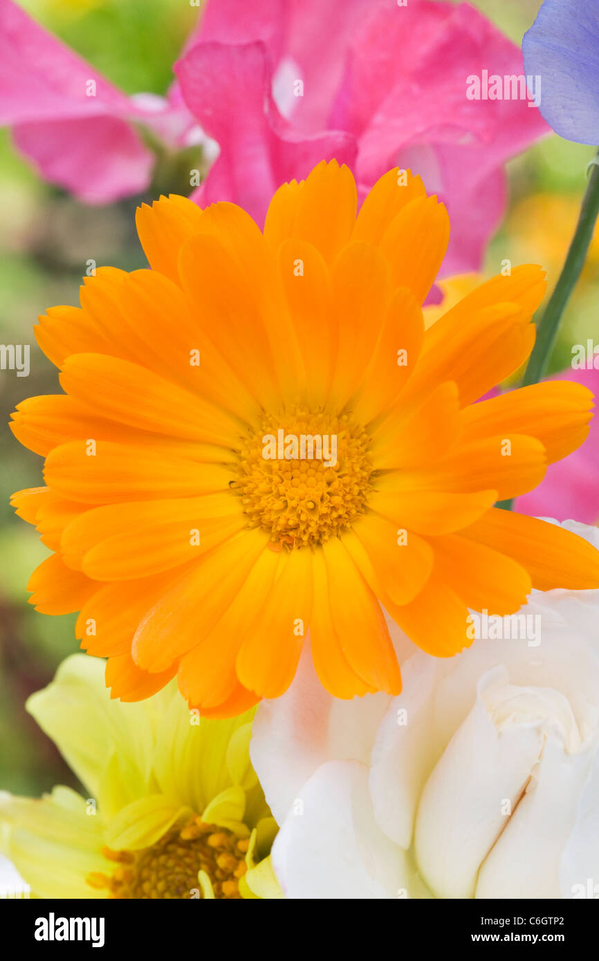 Calendula officinalis, Lathyrus odoratus, Dahlia,and Rosa.Summer flowers in a vase. Stock Photo
