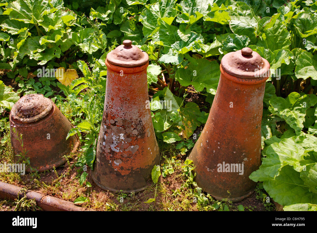 Red earthenware lidded cloches in a kitchen garden - used for forcing celery or leeks - Stock Image