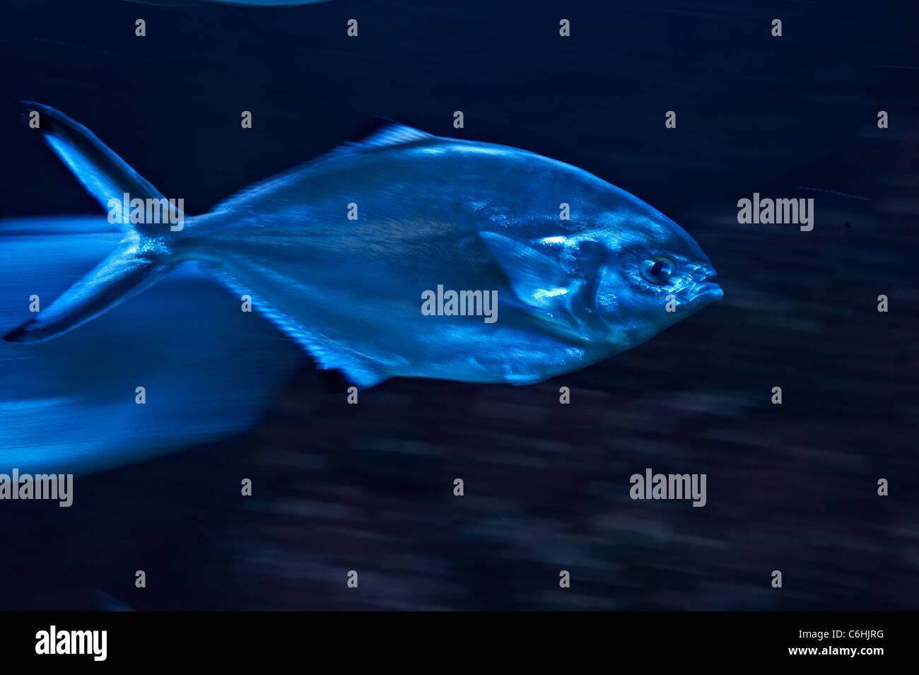 fish - Stock Image