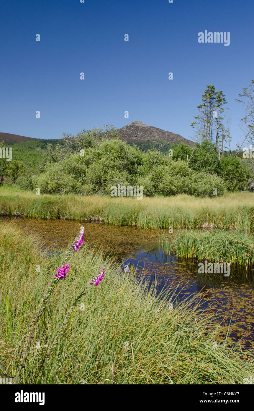 Bennachie or The Mither Tap from fishing pond - Stock Image
