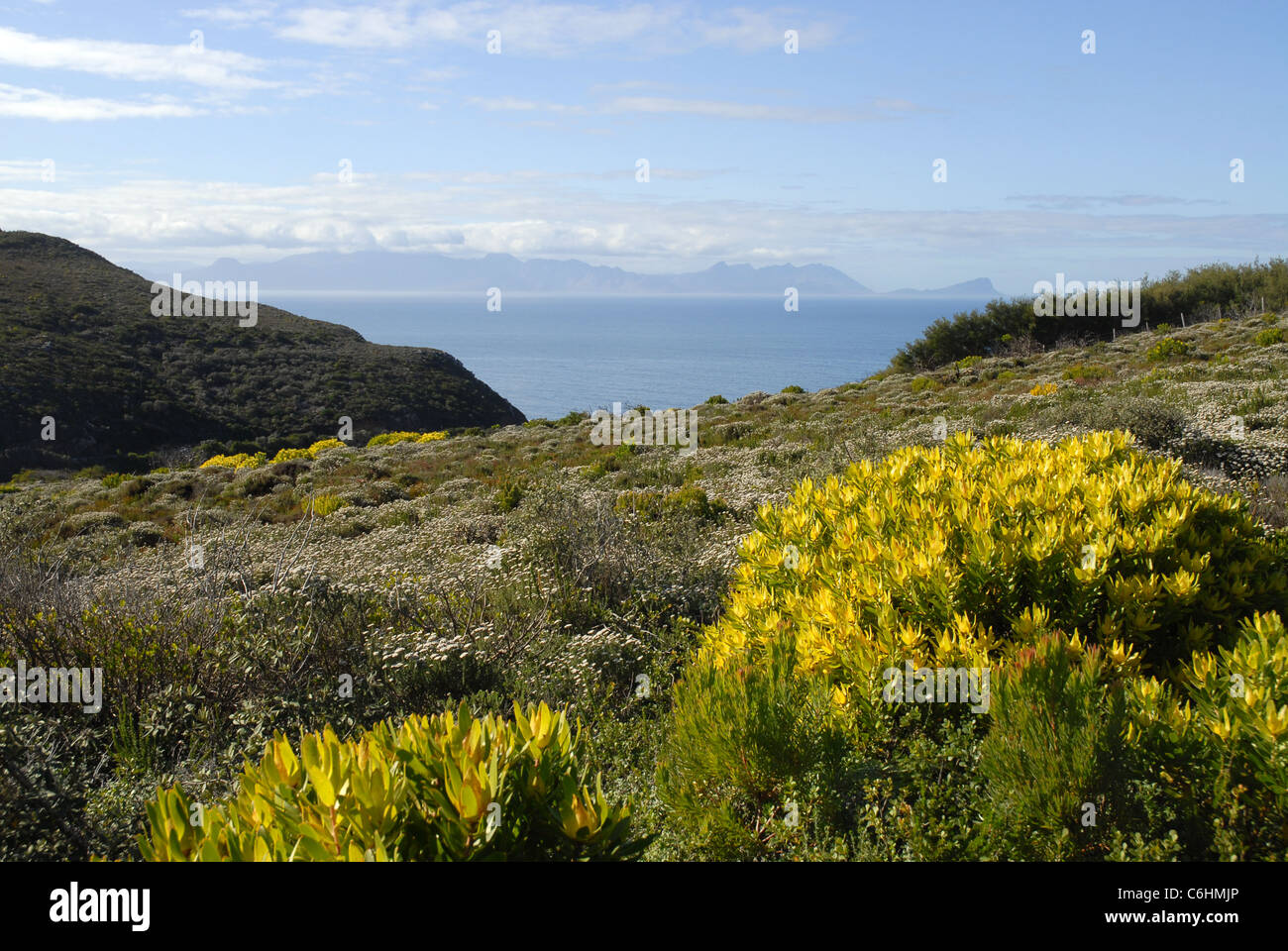 landscape and coastal vegetation, Cape Point, Cape of Good Hope, Table Mountain National Park, Western Cape, South - Stock Image