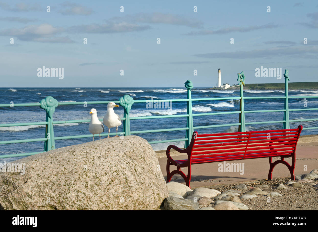 Two seagulls and red bench at promenade railings - Montrose seafront  Angus - Stock Image
