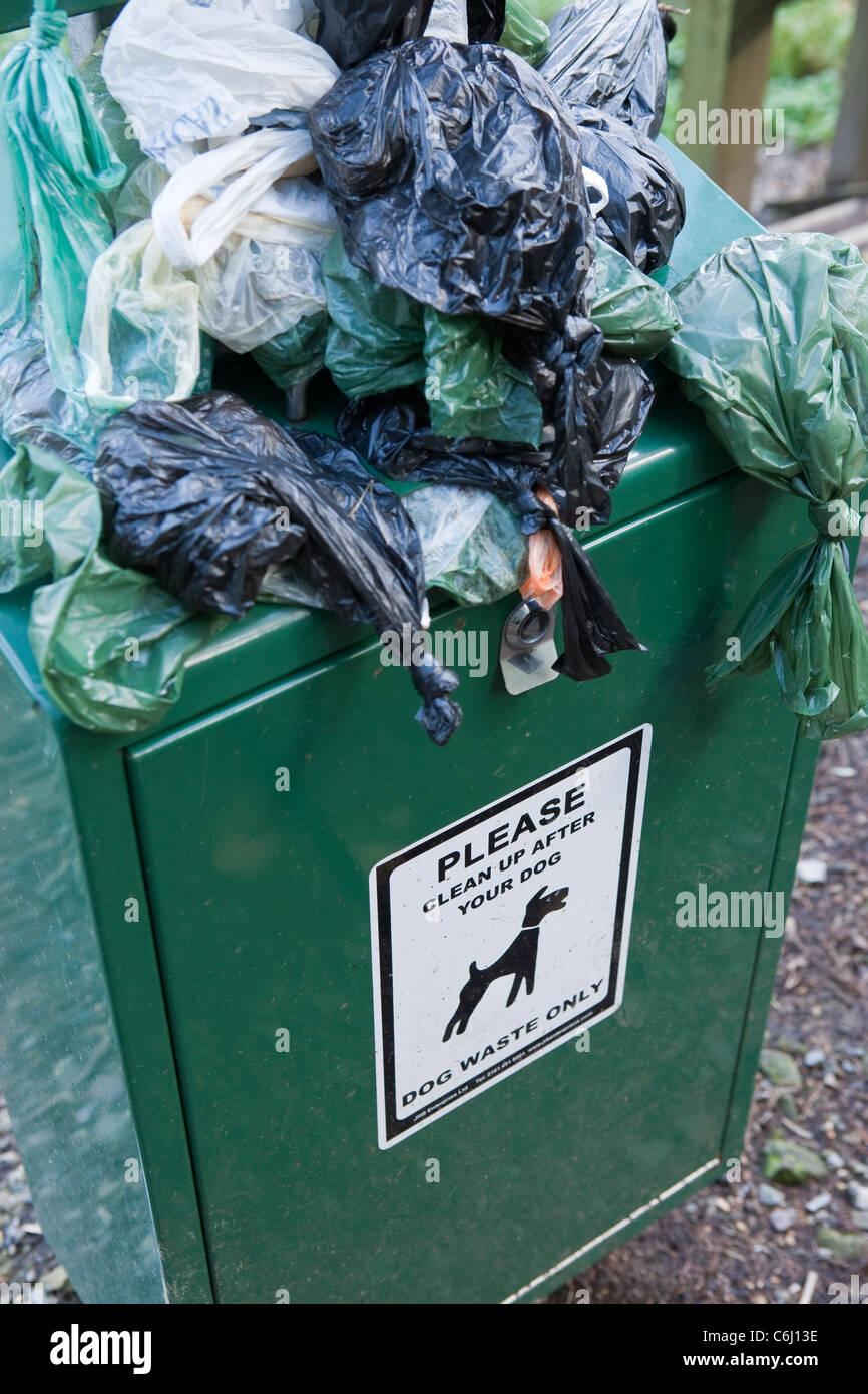 Overflowing Dog waste bin on footpath waste Stock Photo
