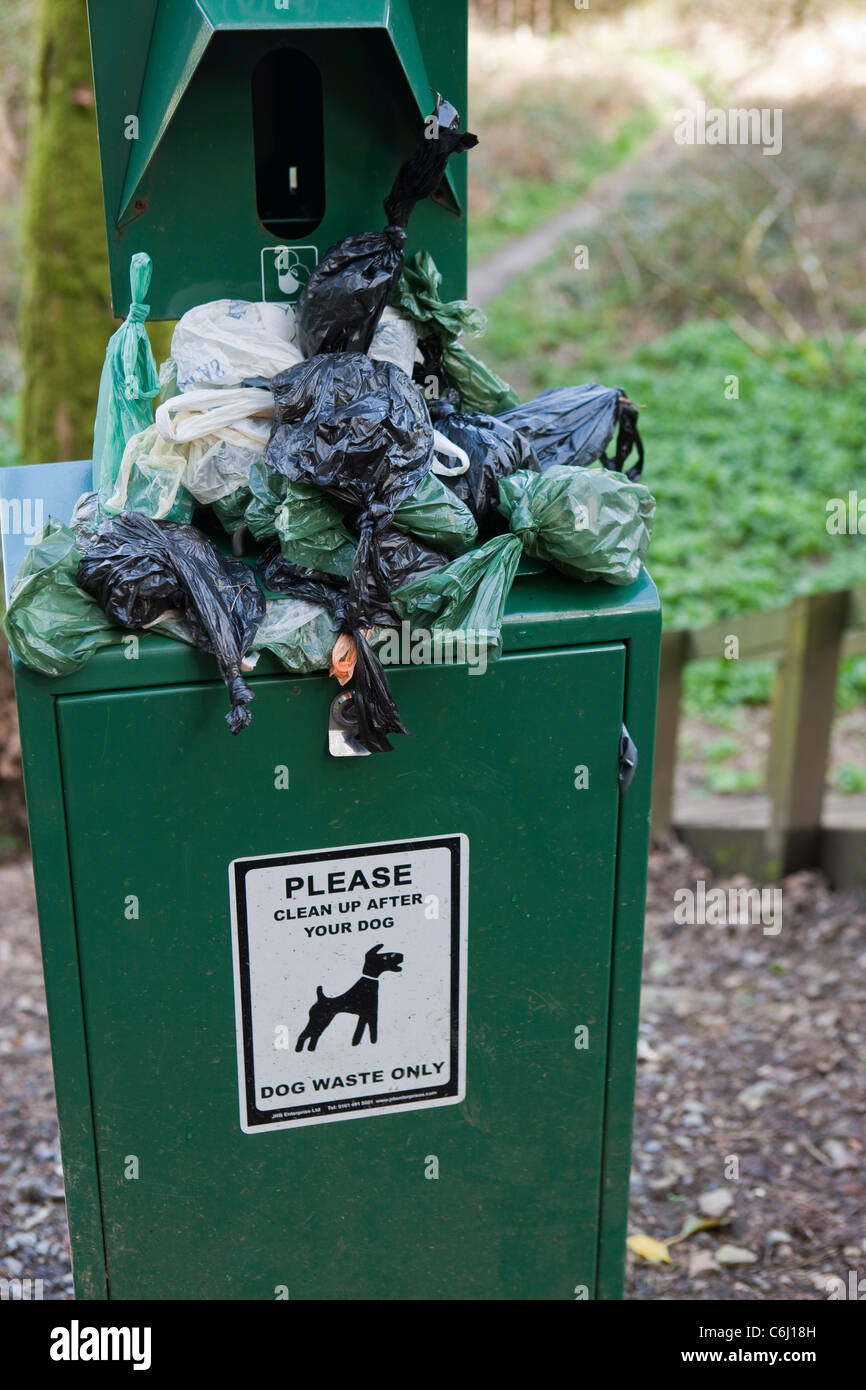 Overflowing Dog waste bin on footpath Stock Photo