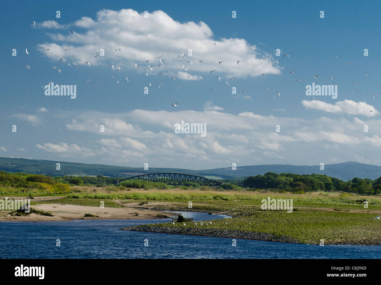 View of metal bridge with terns in flight and estuary of River Spey at Spey Bay, Moray Coast - Stock Image