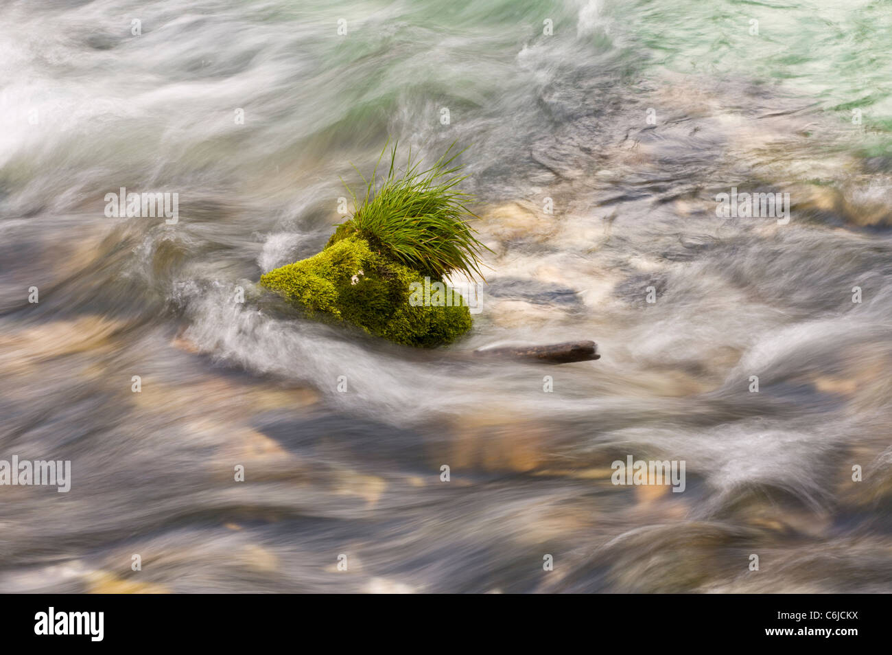 Mossy and grassy rock in clear flowing stream - Stock Image