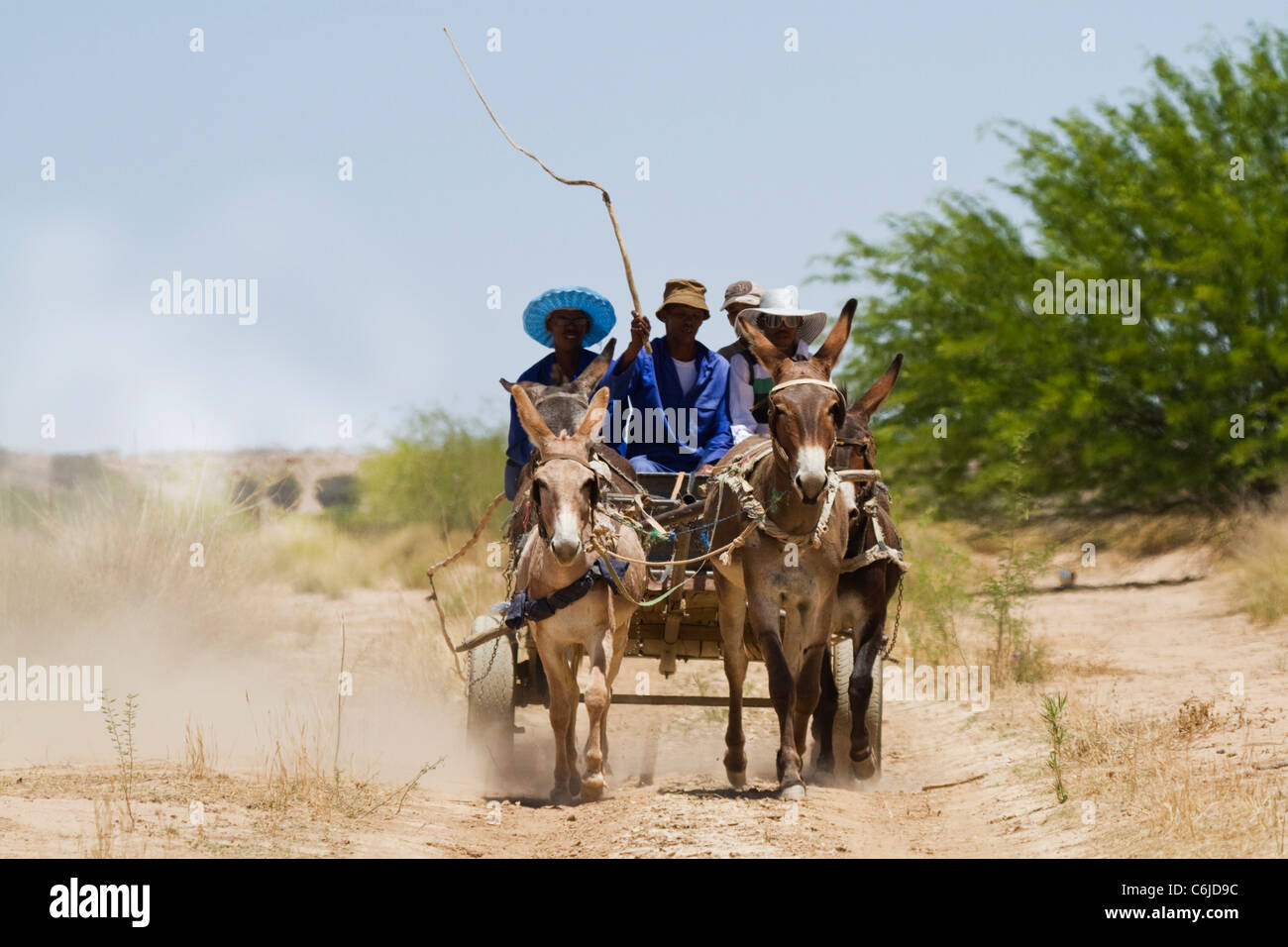 Donkey cart in the Kalahari with a man wielding a whip to urge the donkeys forwards - Stock Image