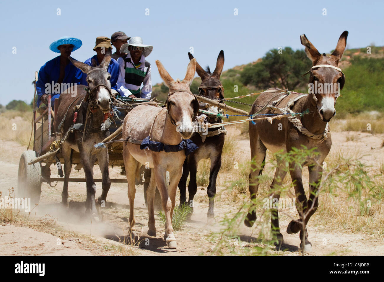 Donkey cart on a dirt track in the Kalahari - Stock Image
