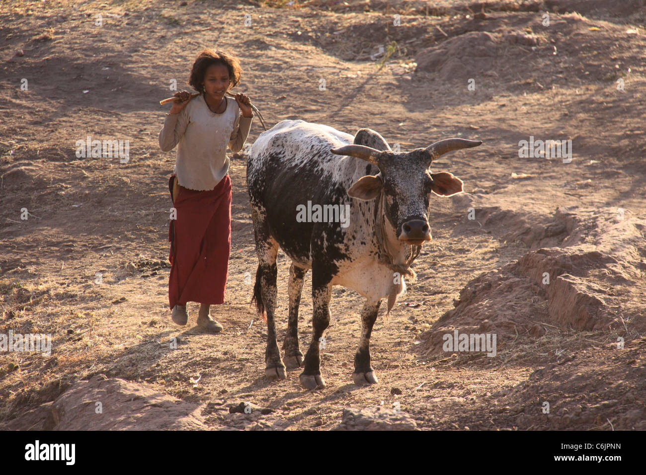 Young girl herding a bull in rural Ethiopia - Stock Image