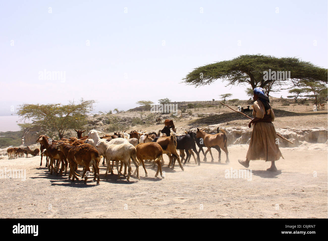 Women herding goats to water in one of the rift valley lakes in the arid central region Stock Photo