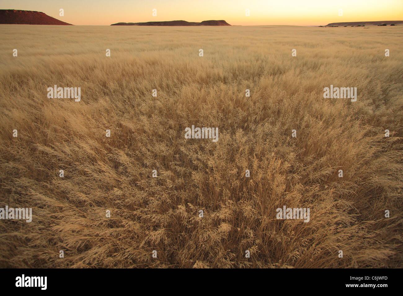 Bushmen grass desert landscape - Stock Image