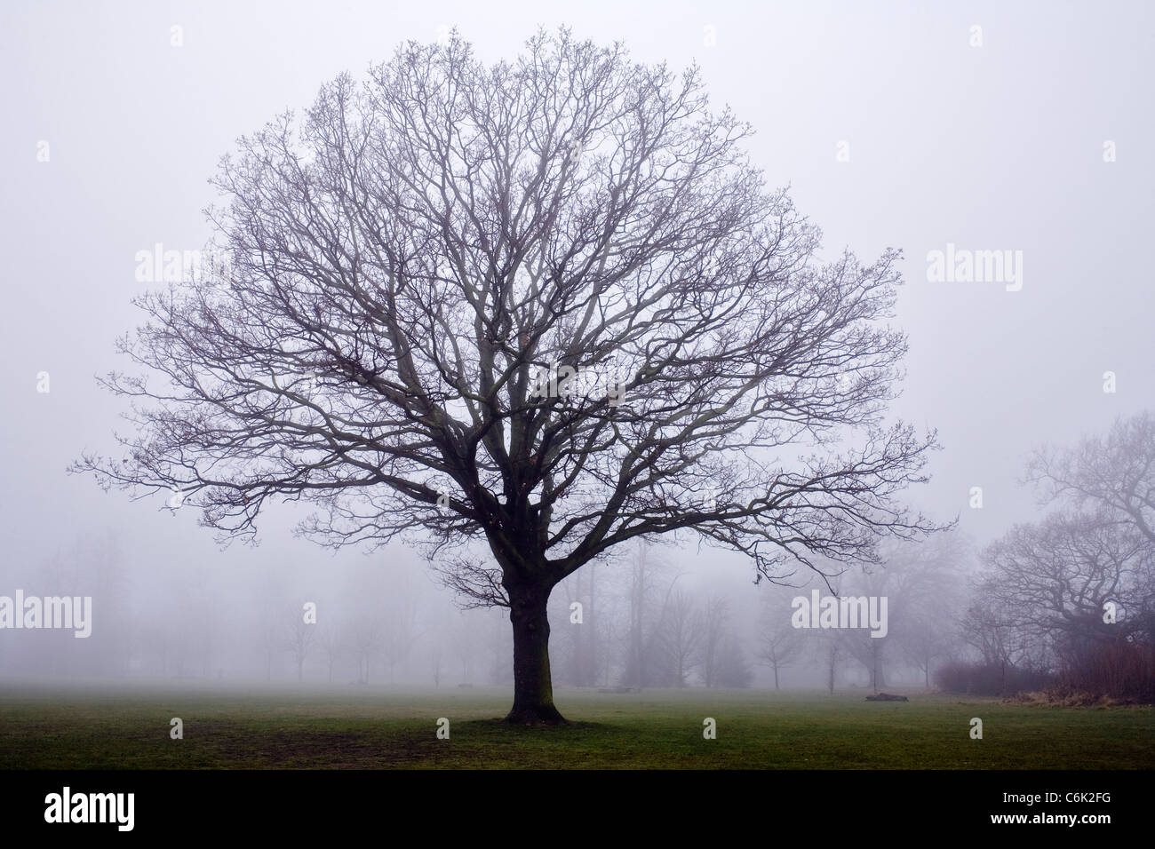 Mist on Tooting Common in South London. - Stock Image