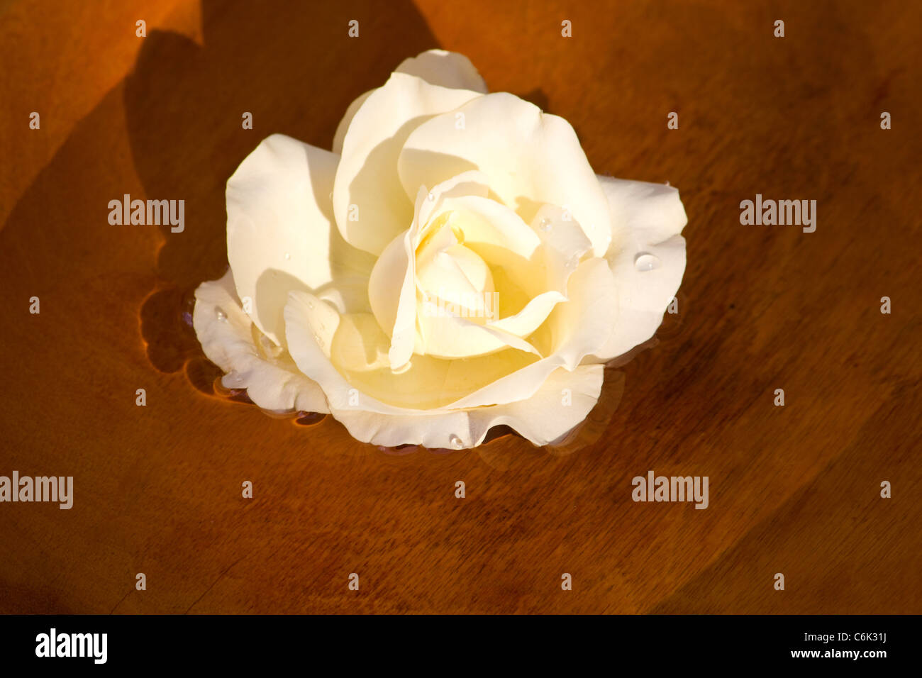 Yellow rose floating on water in a wooden bowl - Stock Image