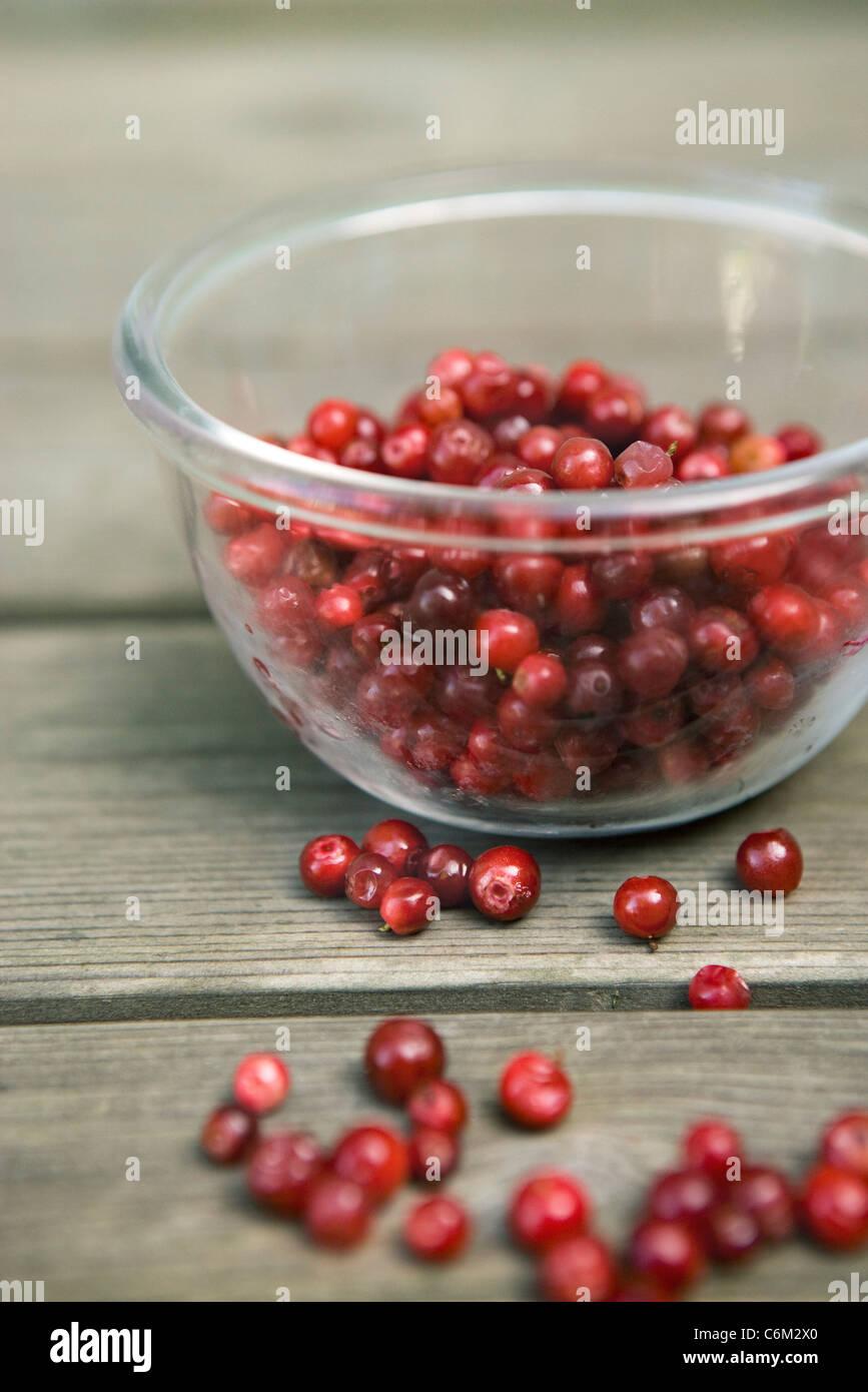 Lingonberries - Stock Image
