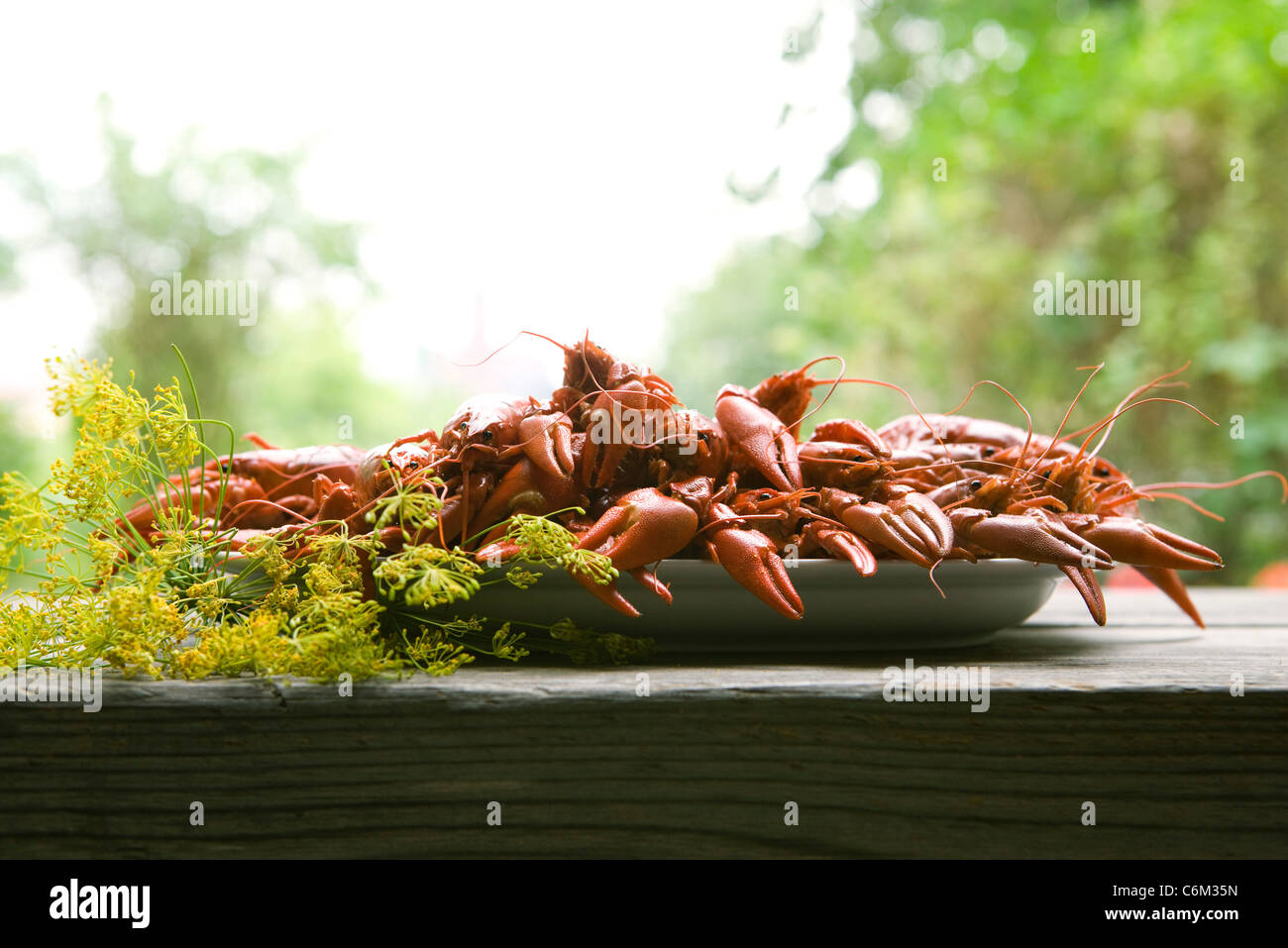 Boiled crawfish on outdoor table Stock Photo