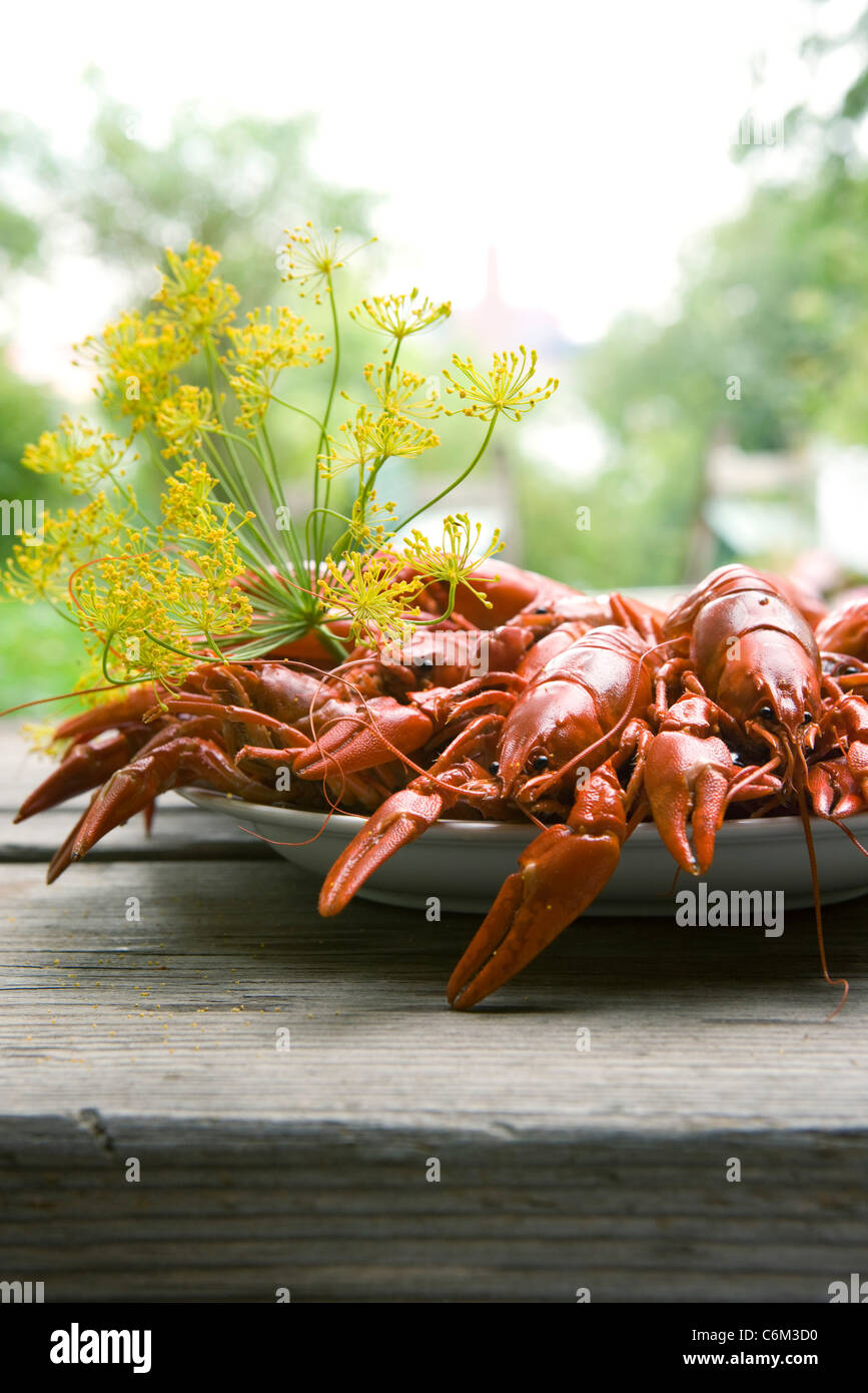 Boiled crawfish garnished with dill Stock Photo