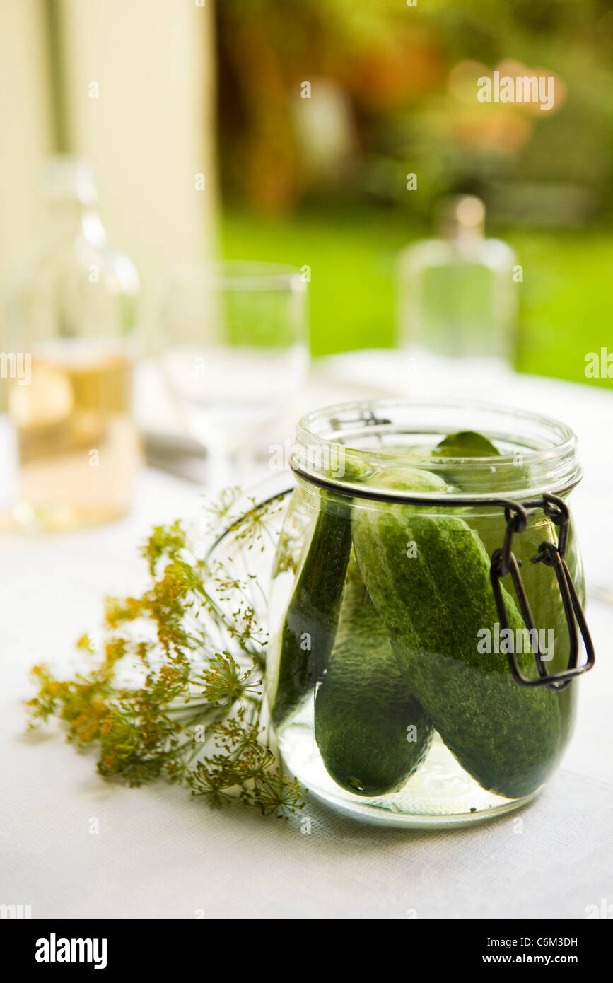 Fresh dill pickles - Stock Image