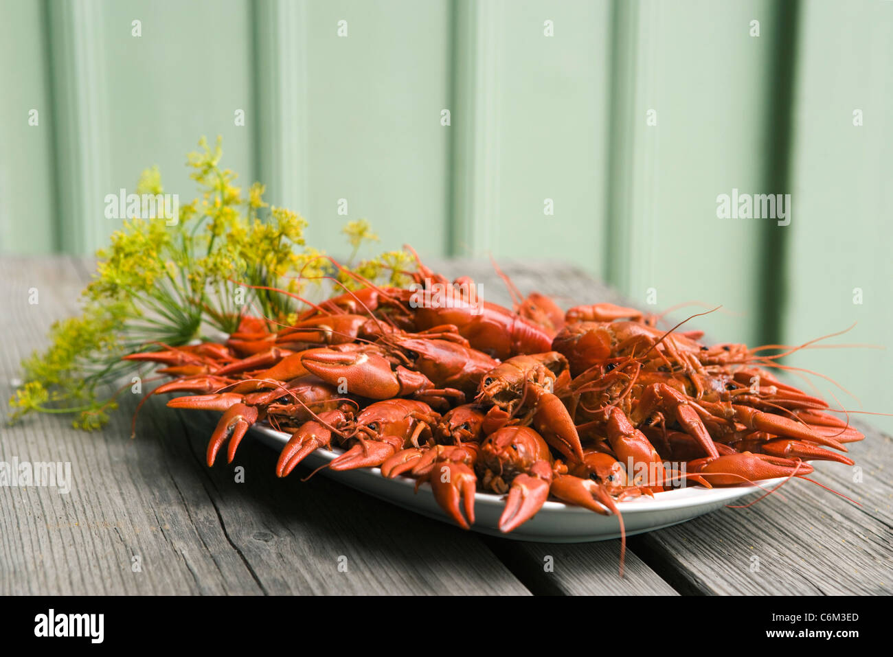 Boiled crawfish garnished with fresh dill - Stock Image