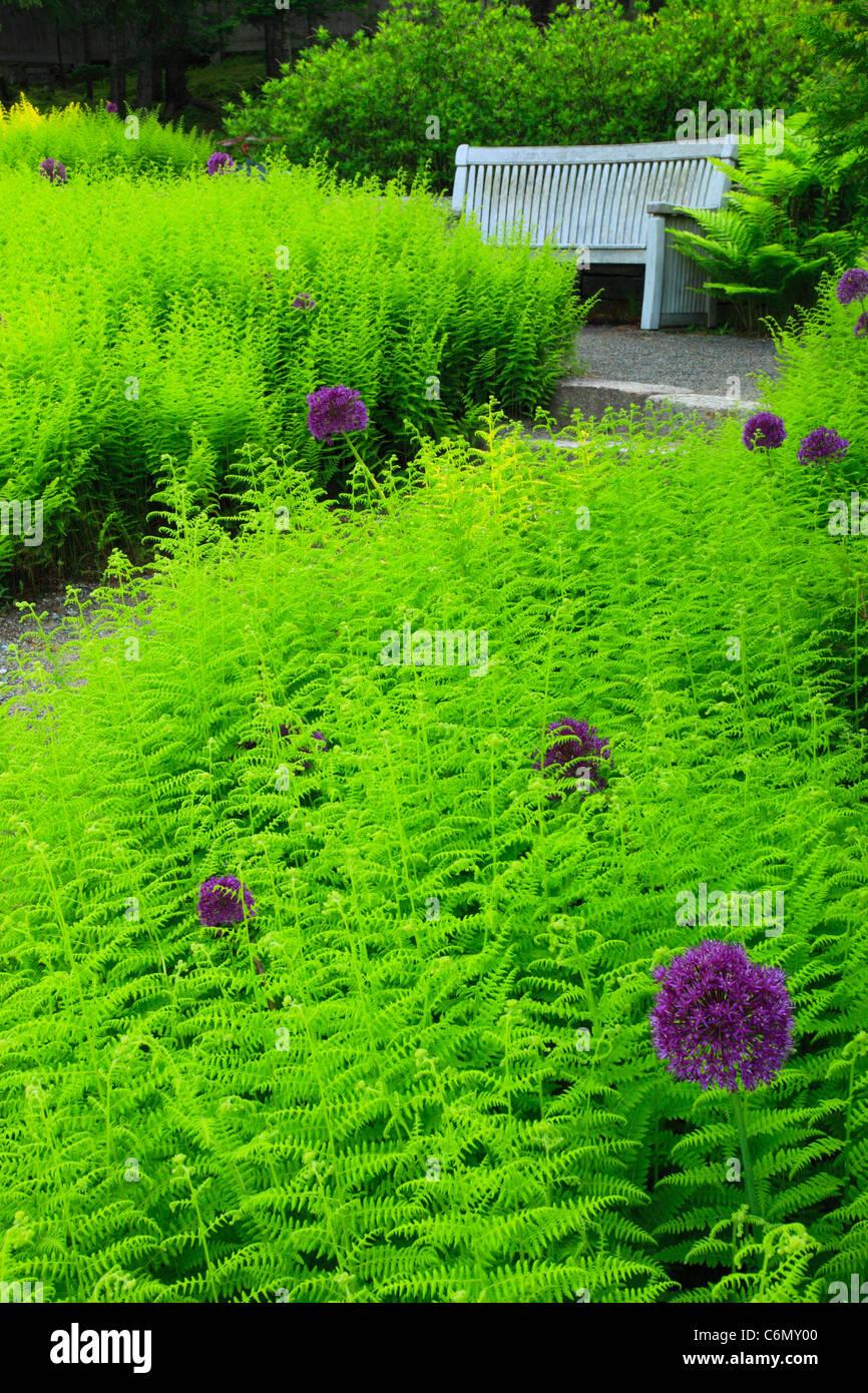 Thuya Gardens, Northeast Harbor, Mount Desert Island, Maine, USA - Stock Image