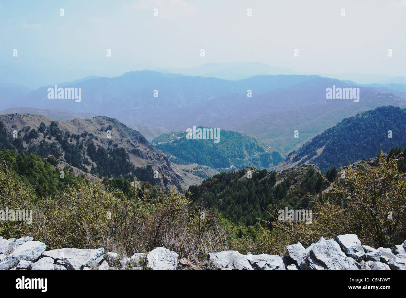 Landscape of Pine trees rolling hills and green valley at Chakrata-Uttarakhand India. - Stock Image