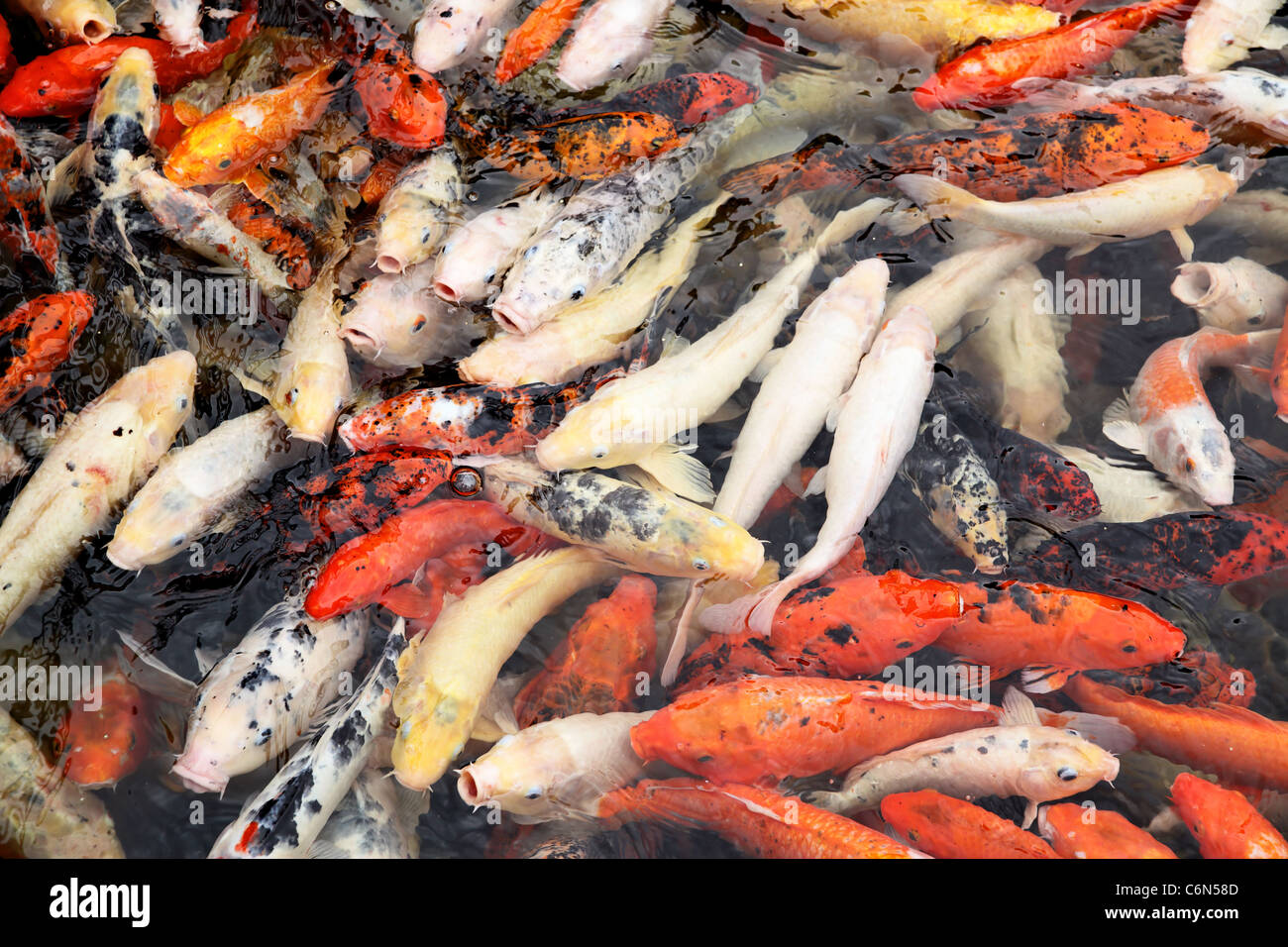 Different Coloured Fish Stock Photos & Different Coloured Fish Stock ...