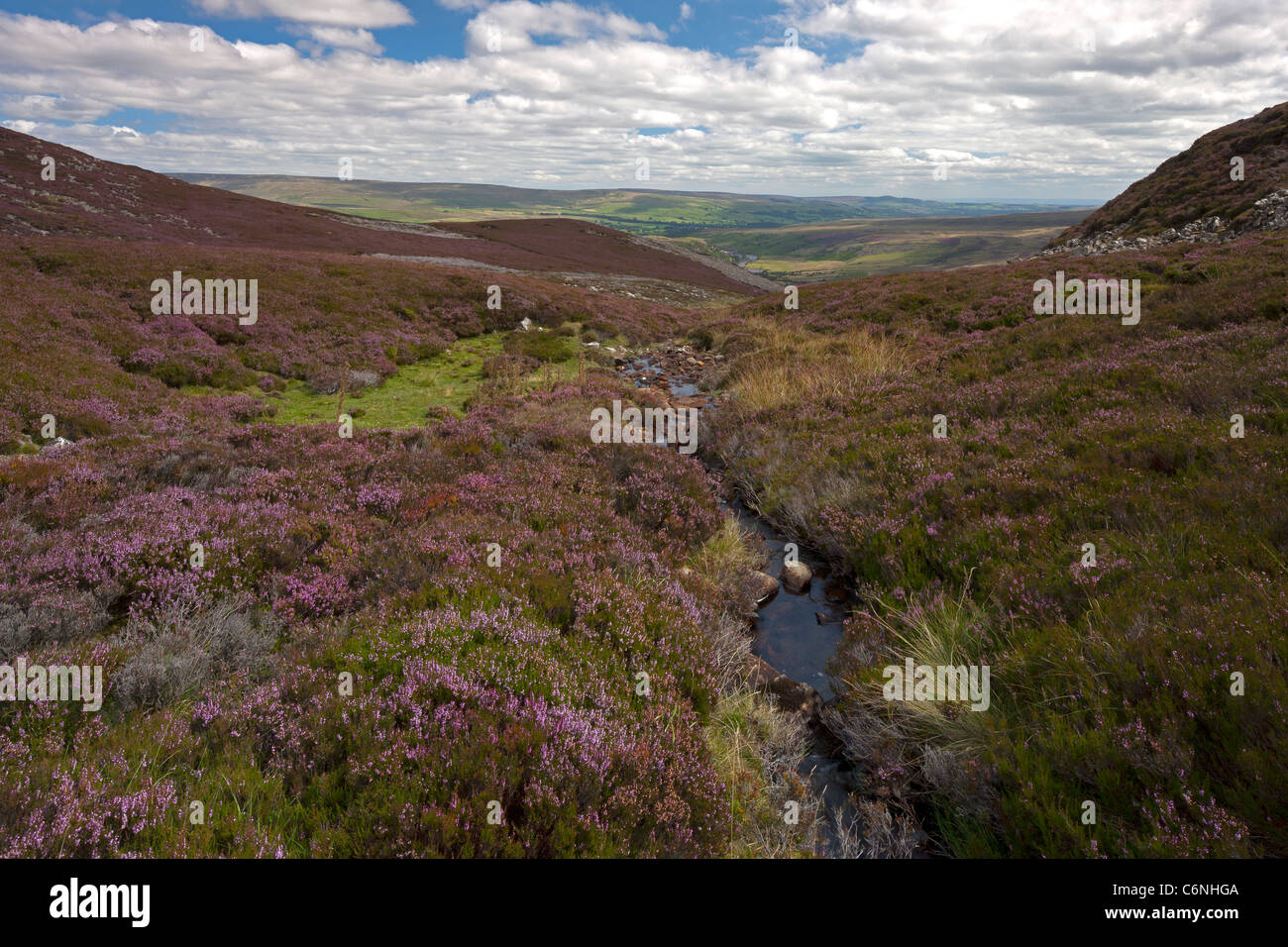 Upper Teesdale Moor near Langdon Beck in the North Pennines, County Durham in summertime - Stock Image