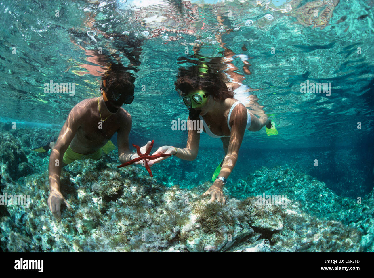 Divers snorkeling on coral table, holding a purple starfish (Ophidiaster ophidianus). Ustica Island, Sicily, Italy Stock Photo