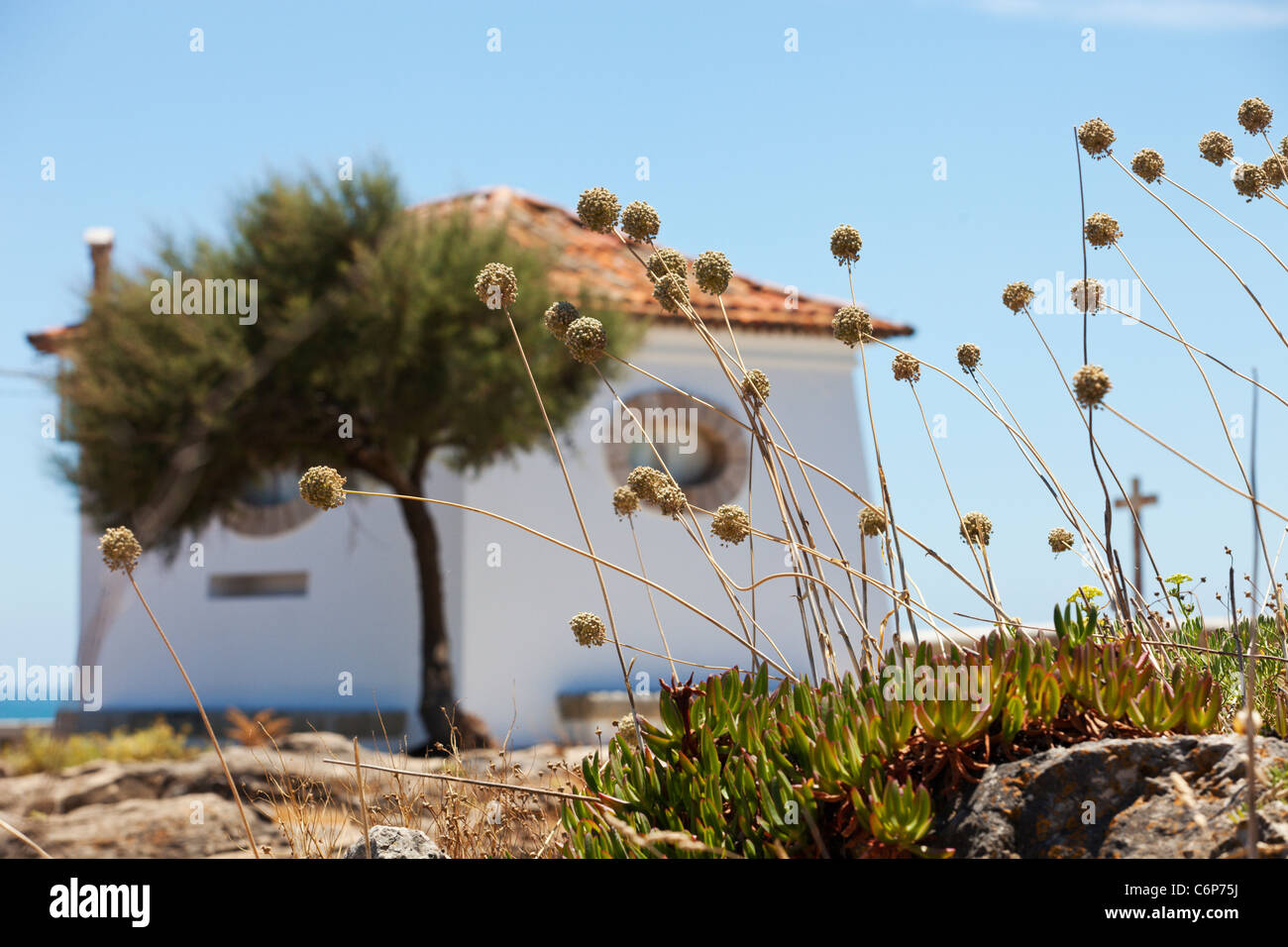 Beautiful house with round windows on the coast. Tree and flowers near house. Cascais, Portugal. Stock Photo