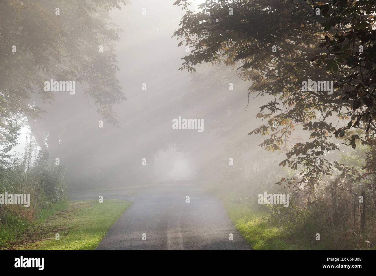 Sun rays through Horse chestnut trees on a country road in early morning misty English countryside Stock Photo