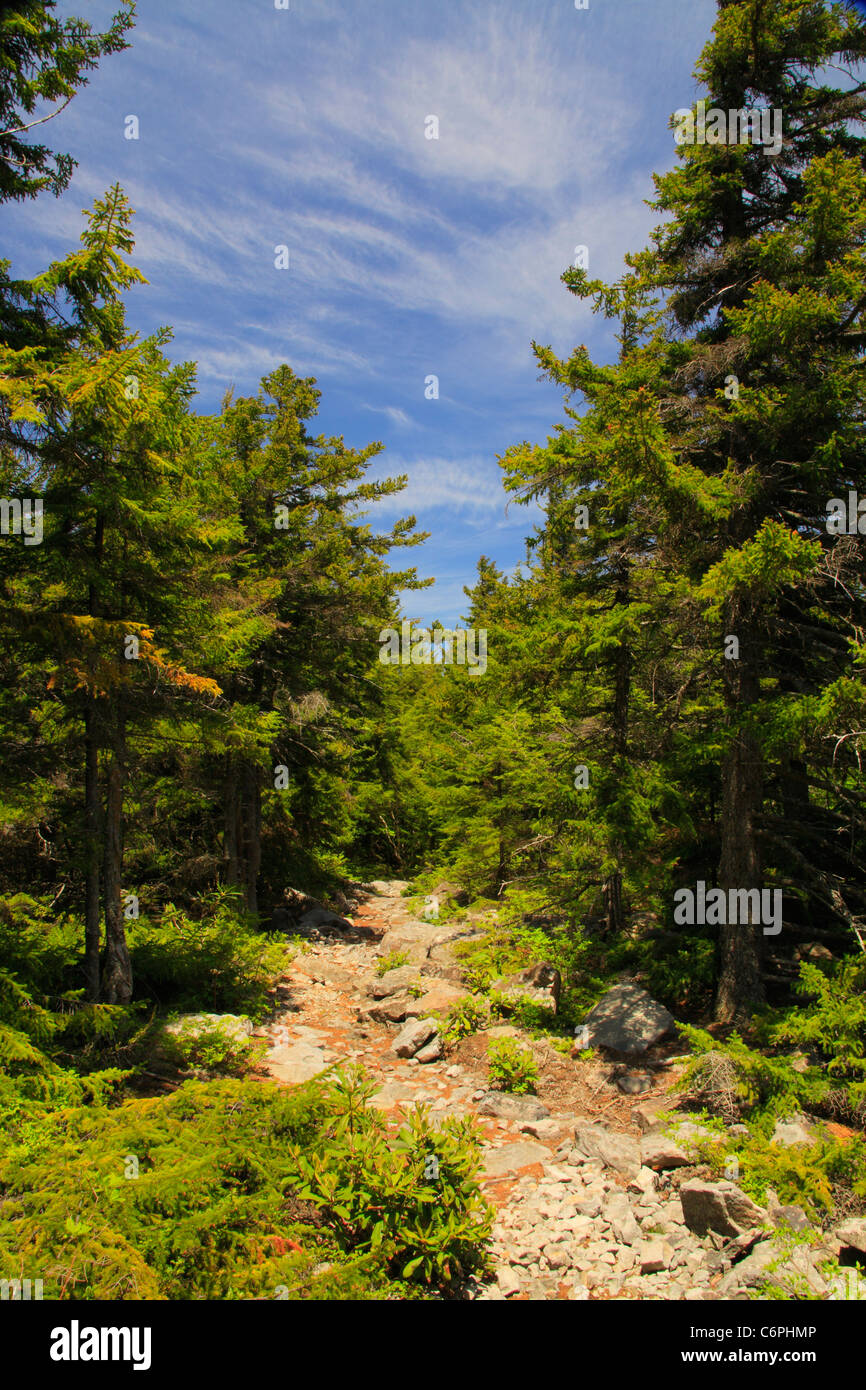 South Prong Trail, Flat Rock and Roaring Plains, Dolly Sods, Dry Creek, West Virginia, USA - Stock Image