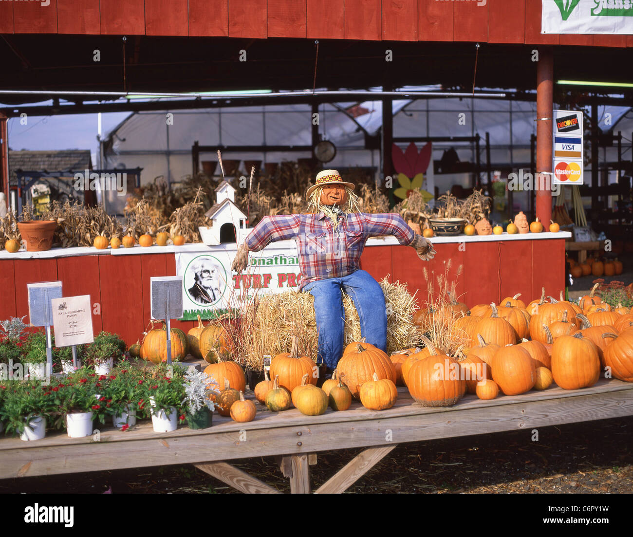 Pumpkin roadside stall with scarecrow, Connecticut, United States of America - Stock Image