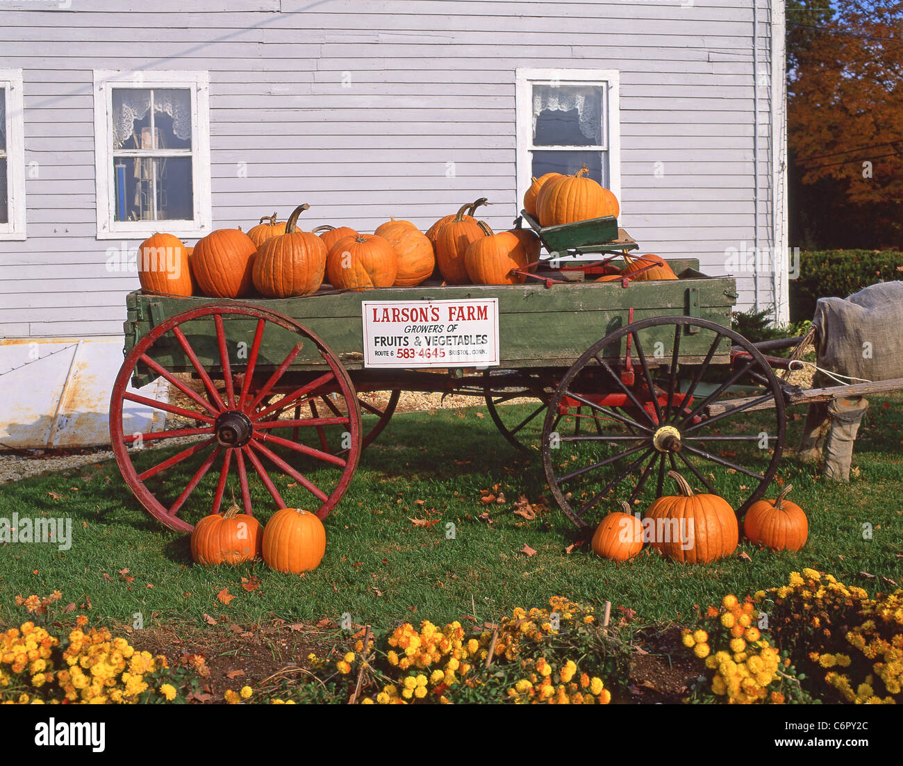 Halloween pumpkin roadside stall, Connecticut, United States of America - Stock Image