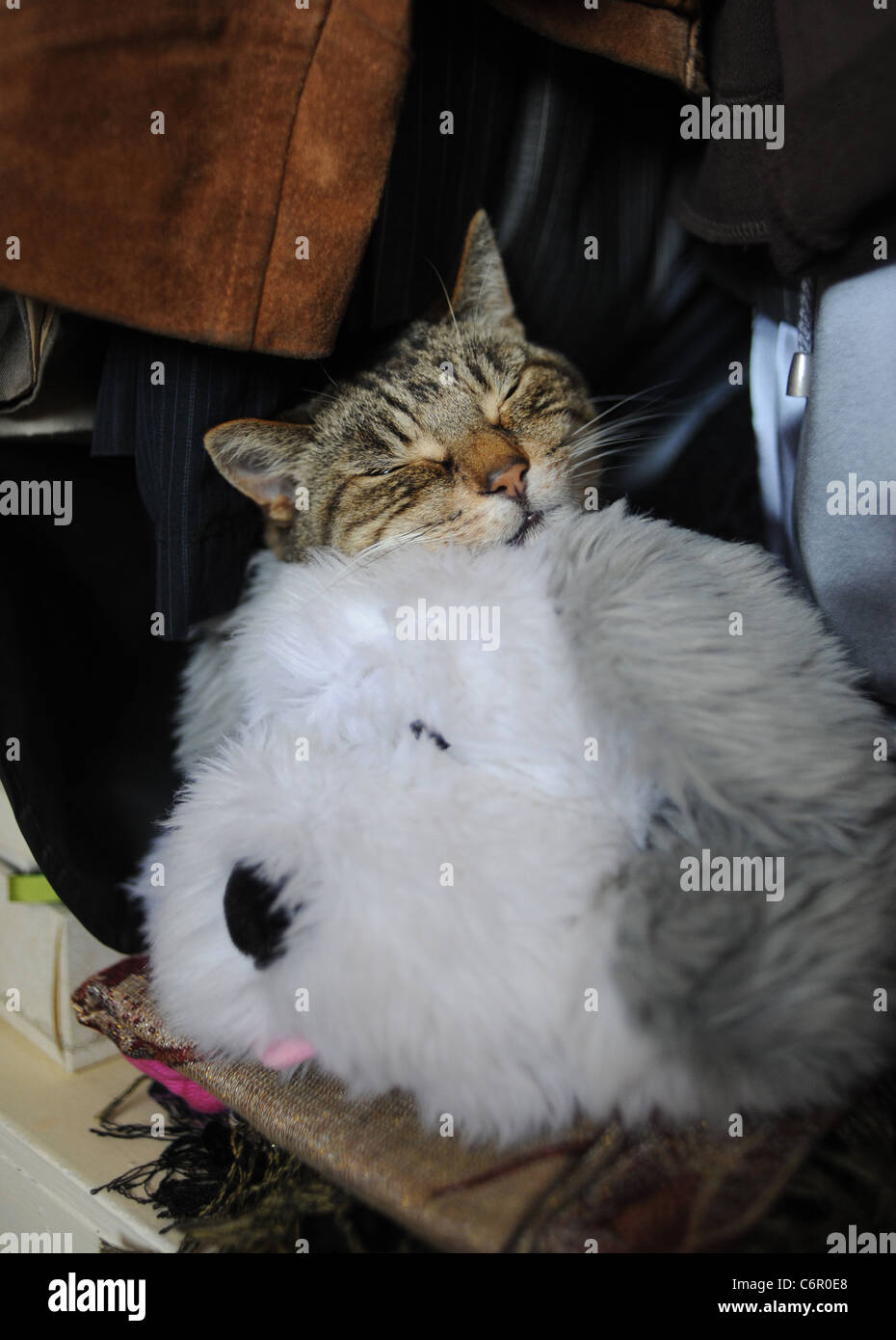 Fluffy cat toy stock photos fluffy cat toy stock images for Fluffy cat toy