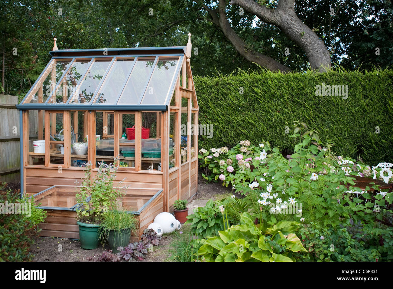 Brand new cute small greenhouse in a private Garden in London with lots of bedding plants in front and some trees. - Stock Image