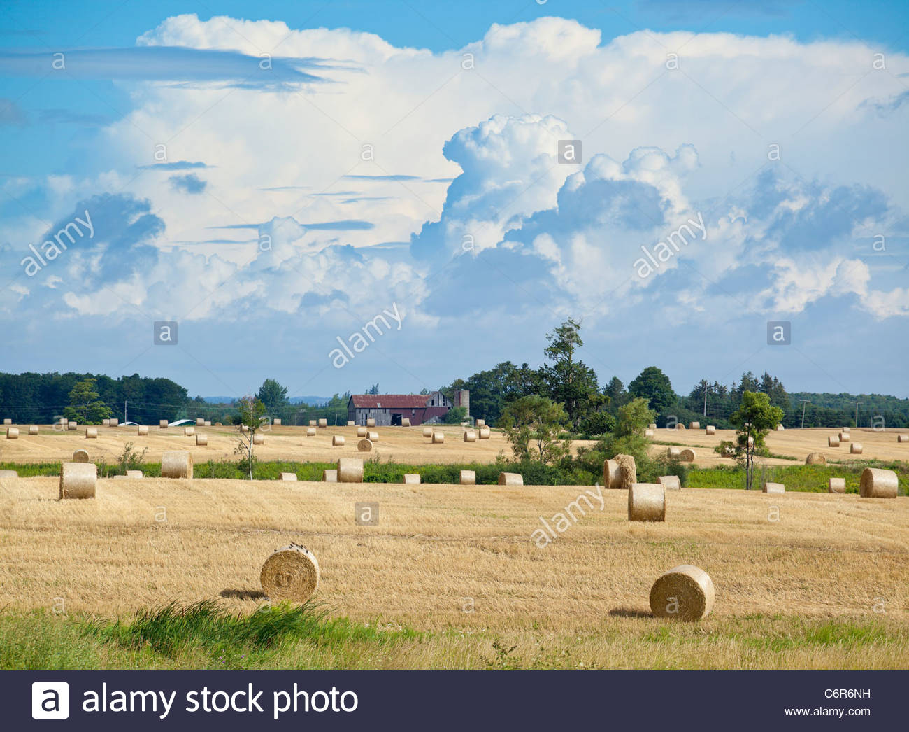 Bales of hay in a field in late summer on a farm near Port Perry Ontario Canada - Stock Image