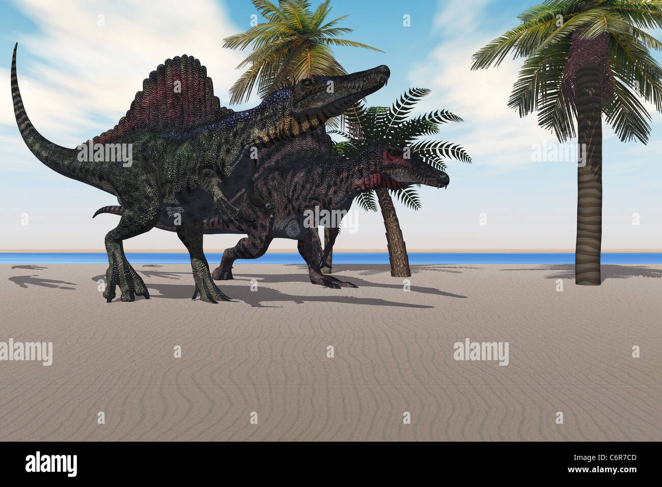 Two Spinosaurus dinosaurs amble down a beach looking for food. - Stock Image