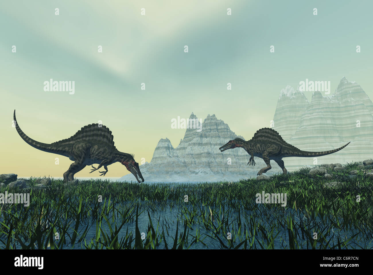 Two Spinosaurus dinosaurs drink from a marsh area in prehistoric times. - Stock Image