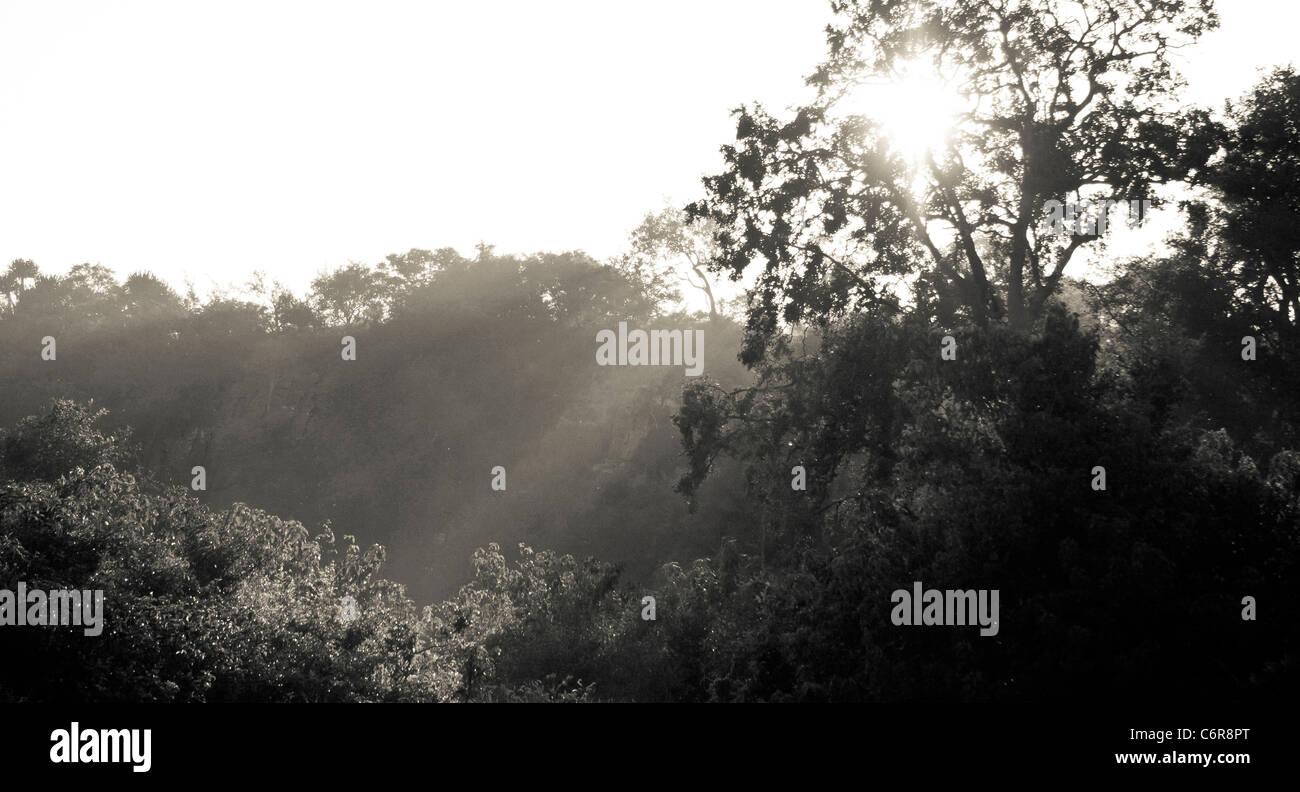 Tree canopy with sun rays Stock Photo