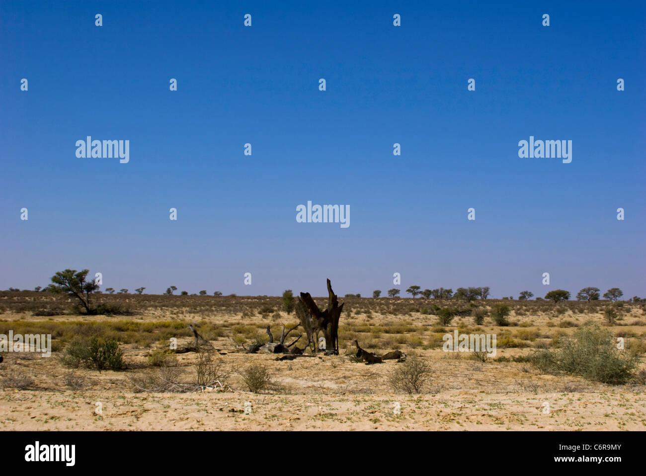 Semi-desert landscape - Stock Image