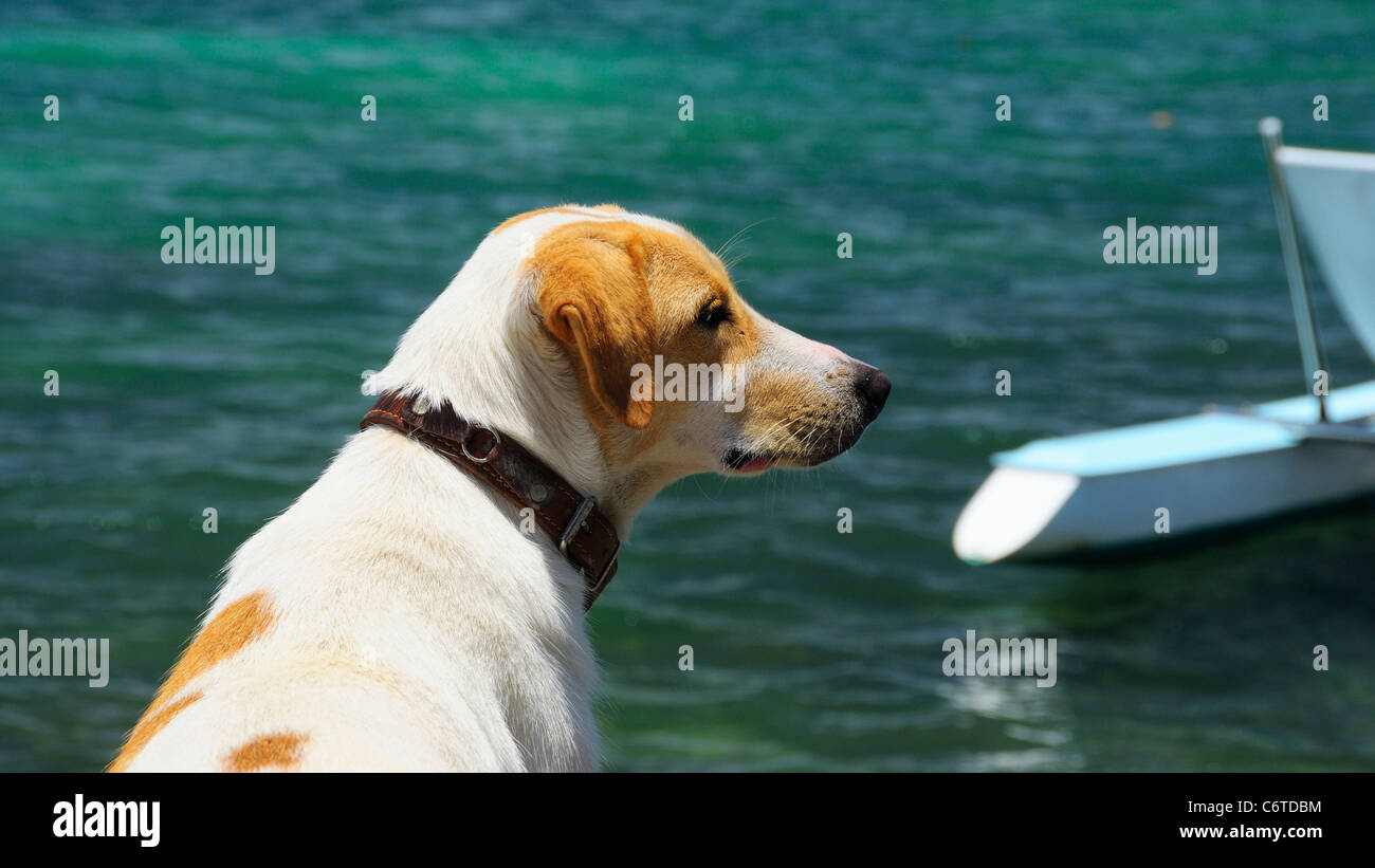 A dog at the beach in Cap Malheureux, Riviere Du Rempart, Mauritius. - Stock Image
