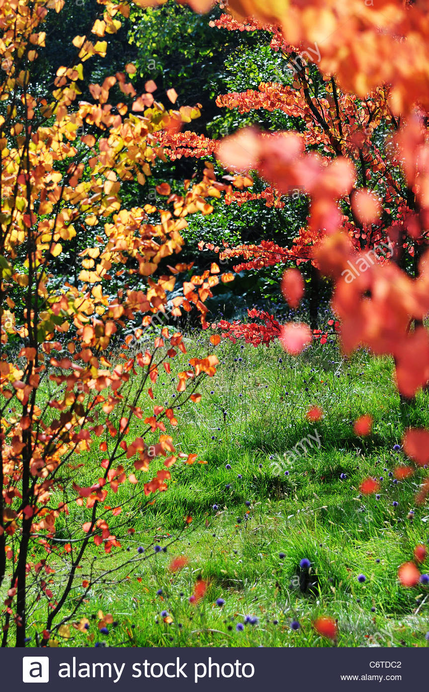summer forest colour - Stock Image