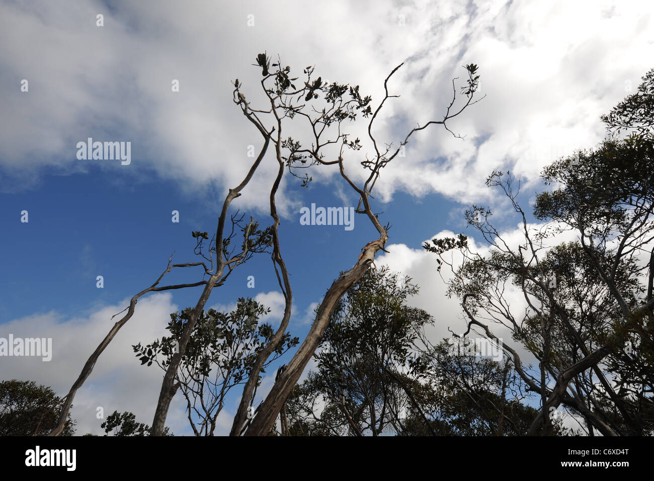 typical Australian 'bush', Shire of Esperance, Western Australia, Australia - Stock Image