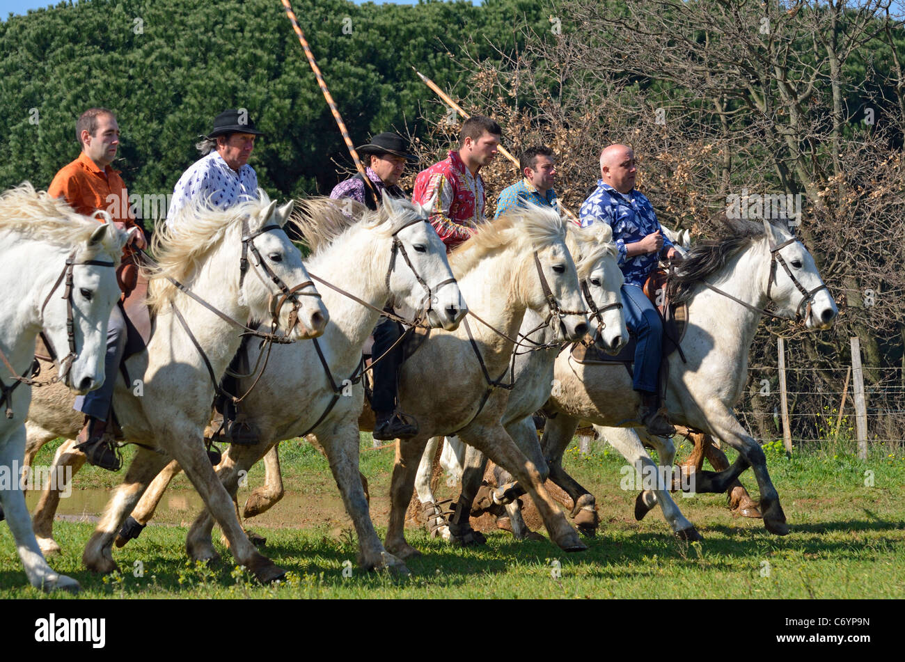 Gardians or Camargue cowboys riding horse and holding the traditional camargue rod used to bring together the bulls, - Stock Image