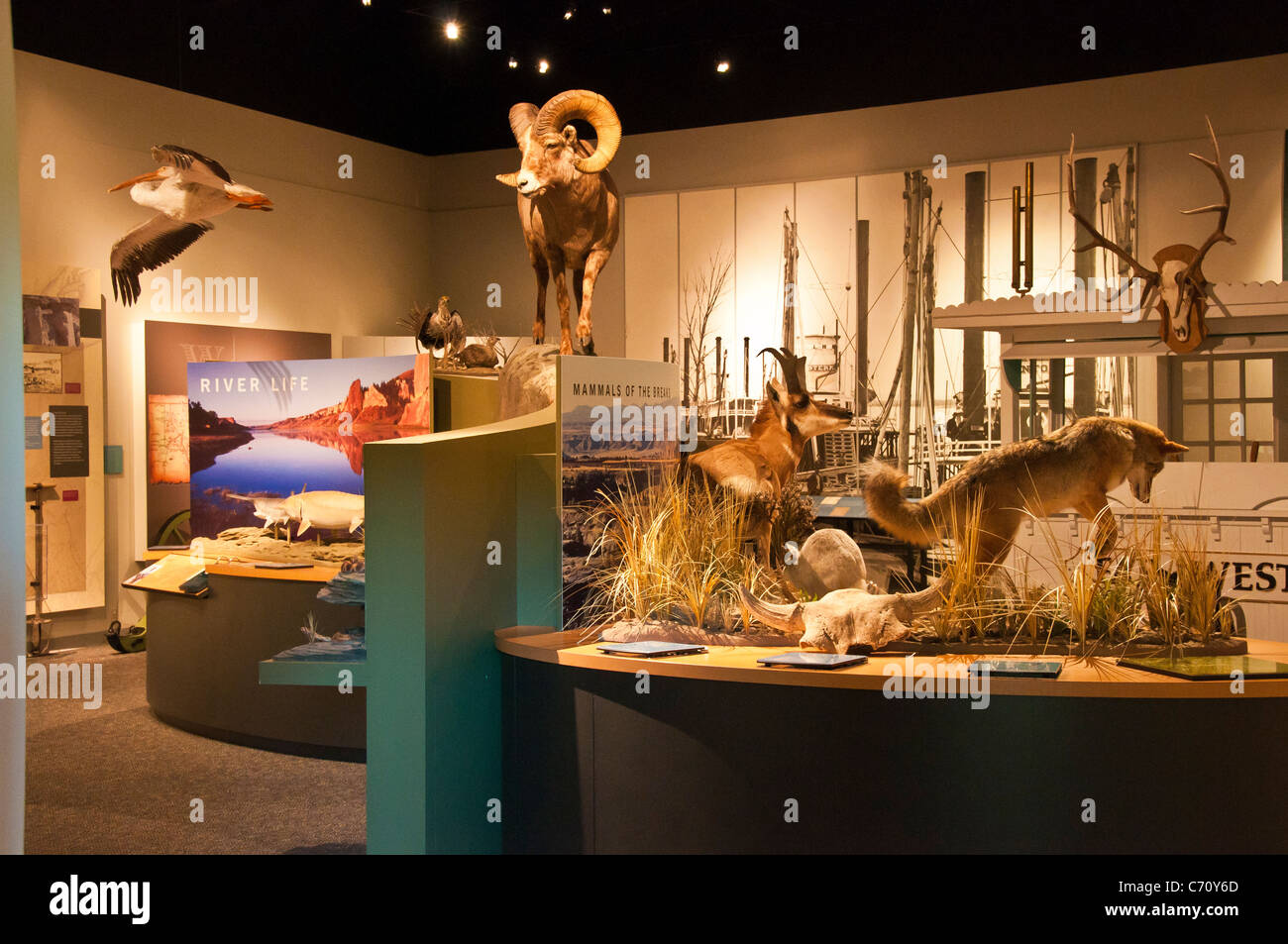Exhibits in the Upper Missouri Breaks National Monument Interpretive Center, Fort Benton, Montana. Stock Photo