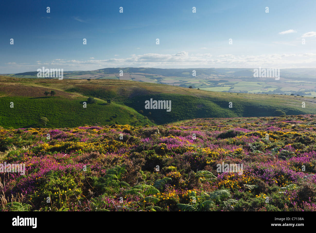 View over Weacombe Combe from Beacon Hill. Quantock Hills. Somerset. England. UK. - Stock Image