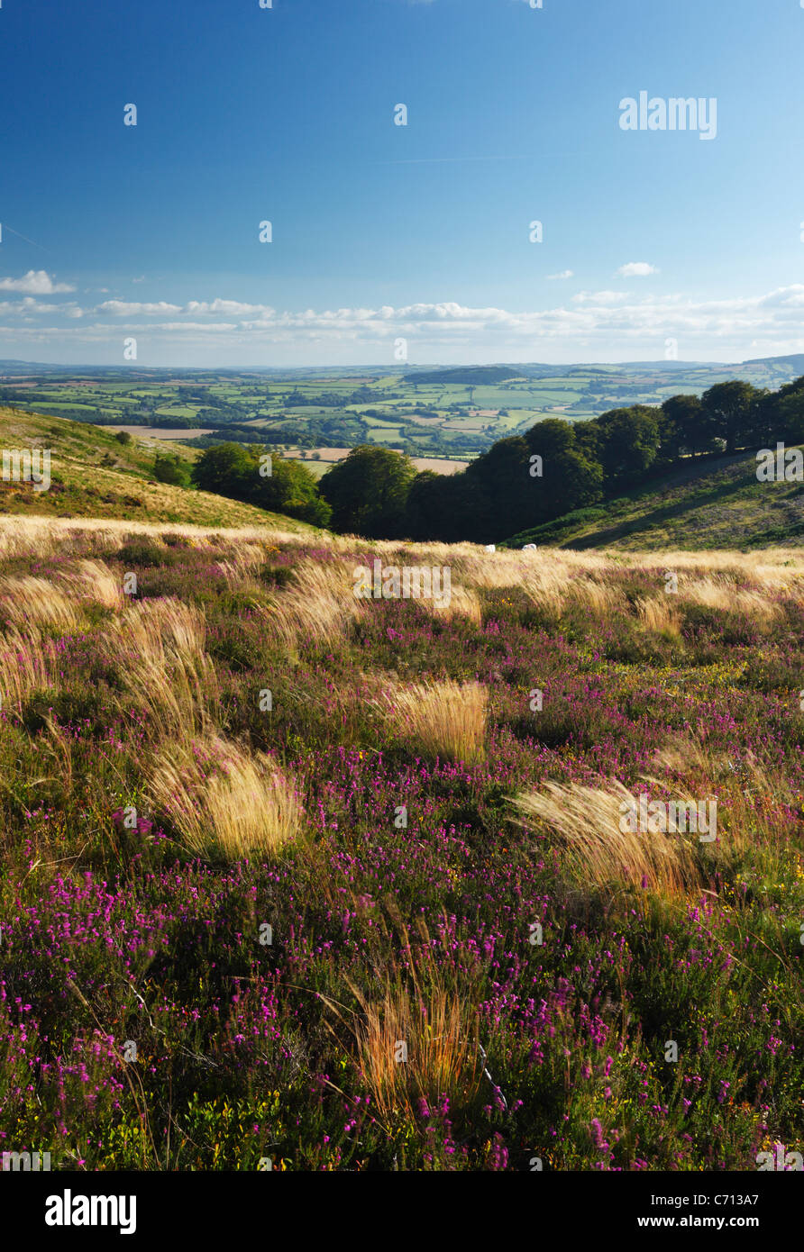 View down Paradise Combe from Thorncombe Hill. The Quantock Hills. Somerset. England. UK. - Stock Image