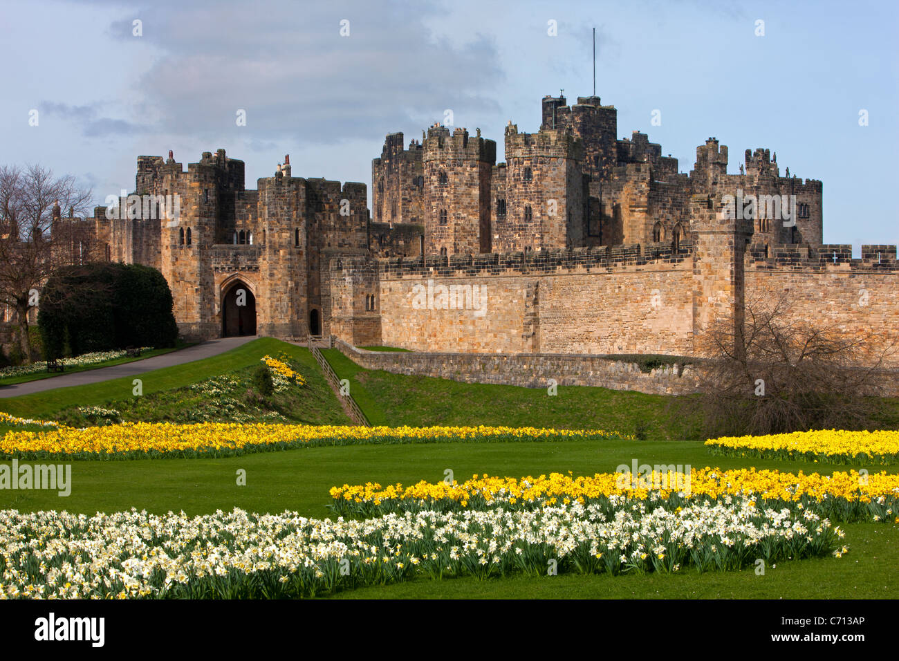Alnwick Castle, Northumberland, in Spring with daffodils - Stock Image